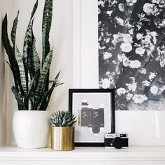 plants for styling a home
