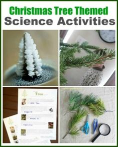 90 Best Preschool Forest Theme Images On Pinterest Day Care