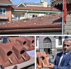 Roof Tiles, Pretty Cool, Bird Feathers, Bird Houses, Fun Facts, Diy, The Unit, Birds, Instagram Posts
