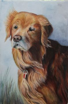Commissioned watercolor painting of my sister's golden retriever, Beau