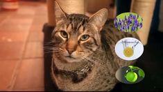 ARENA SANITARIA PARA GATOS A DOMICILIO BOGOTA 3153246127 Gatos Cats, Youtube, Animals, Vestidos, Skirts, Animales, Animaux, Animal, Animais