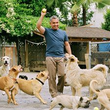 How to Stimulate Your Dog's Mind | Cesar Millan