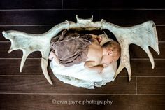 newborn photography with antlers