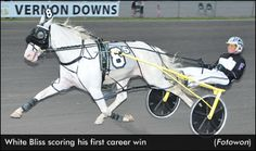 White Bliss Earns First Career Win Majestic Horse, Beautiful Horses, Animals Beautiful, Standardbred Horse, Thoroughbred, Horse Racing, Race Horses, Harness Racing, Horse Silhouette