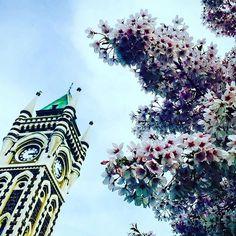 【littletravellerfromjapan】さんのInstagramをピンしています。 《🇳🇿 ✈︎Dunedin, New Zealand (ダニーデン、ニュージーランド) 🏴The Clocktower Building, University of Otago (時計台、オタゴ大学) * Spring has come 🌸 Cherryblossoms are in full bloom⋆*❁*⋆ฺ。* * 桜が満開♩ 初めて海外でお花見したけど、文化パフォーマンスや日本食もあって、日本以上に日本らしかったかも☺️ * #spring #beautiful #cherryblossoms #clocktower #universityofotago #dunedin #newzealand #dunnerstunner #aroundtheworld #wonderlust #travel #travelgram #instatravel #春 #きれい #お花見 #桜 #満開 #時計台 #オタゴ大学 #ダニーデン #ニュージーランド #旅 #一人旅…