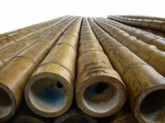 """""""Guadua Angustifolia"""" branded """"Giant Timber Bamboo,"""" is recognized as one of the strongest species available in he world. With a tensile strength of steel, it is used for construction purposes. Its growing popularity for architectural projects around the globe prompted our company's decision for importation of this highly revered bamboo. Its heavy sidewalls, minimal taper and particularly straight quality's over its length, make it ideal for any residential or commercial design."""