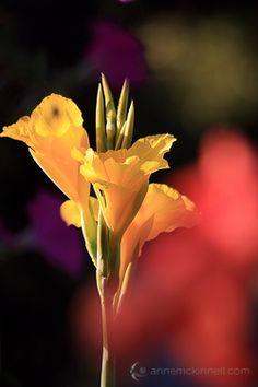 Flowers using the shoot through technique.