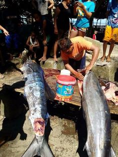 Fish covered in strange 'tattoos' caught in the Philippines