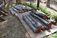 How to grow mushrooms on logs – Joybyilee Farm