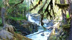 Welcome to a Pacific Northwest wonderland full of aquamarine rivers and ancient trees.