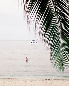 Currently dreaming about coconuts and palm trees!  Who could use a little vitamin sea today? For more Thailand inspo check put the latest post link in bio! #amazingthailand #tourismthailand