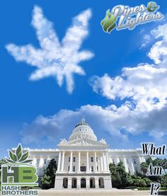 A key MJ ballot initiative this Fall in which state? ;-) @Hash_Brothers #games #boardgames #CO #Pot #MJ #MMJ #Trivia #Fun #Marijuana #Weed #Dabs #Stoners #Hash #High #Pipes #Lighters @WeedLifeNetwork #stoned #Stoner #ganja #420 #Chronic #Dope #Dab #Stash #Spliff #OR #WA #AK #DC @EmeraldFieldsCO