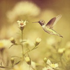 The hummingbird is from Glorious Nature Art Collection. Better On Black Glorious Nature Art Collection Soulful Textures and Actions Florabella Textures Pretty Pics, Pretty Pictures, Hummingbird Pictures, Foil Art, Just Smile, Pictures To Paint, Hummingbirds, Bird Feathers, Beautiful Birds