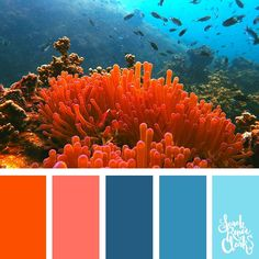 Coral color scheme Explore the beautiful colors of the ocean with these 25 color palettes inspired by ocean life and PANTONE s 2019 Color of the Year Living Coral Find color inspiration for acrylic pouring art color combinations coloring books and more at Ocean Color Palette, Beach Color Palettes, Ocean Colors, Colour Pallette, Coral Color Schemes, Color Schemes Design, Design Color, Color Patterns, Design Design