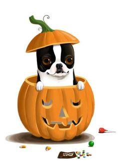 Boston Terrier Pumpkin dog art print by rubenacker on Etsy