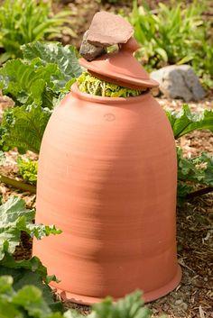 Pimeässä kasvatetut raparperit ovat erityistä herkkua Diy And Crafts, Planter Pots, Flowers, Outdoors, Gardening, Baking, Future, Sweet, Candy