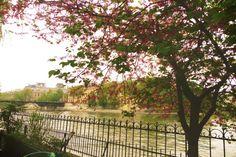 The beauty of Paris #travel