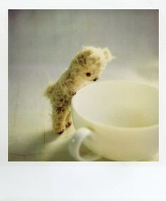 bear where has all the tea gone,and what does it say in my leaves...very cute little furry teddy bear and teacup