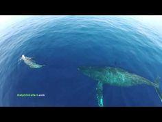 Grabando con un dron en alta mar, estampida de delfines y ballenas, una cono su cría - YouTube