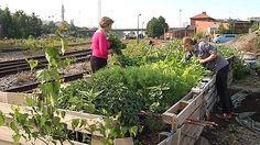 kaupunkiviljely, vapaa kansalaistoiminta