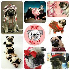Pug Addict