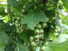 Fruit, Plants, Food, Meal, The Fruit, Essen, Flora, Hoods, Plant