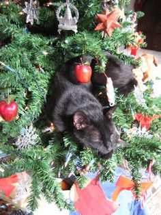 Another view of the black cat tree napper. Cat Christmas Tree, Christmas Kitten, Christmas Holidays, Black Christmas, Marie Cat, What Cat, Kinds Of Cats, Santa's Little Helper, Cat Photography