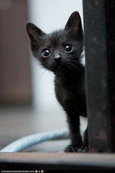 ❥ Beautiful Black Cats ♥