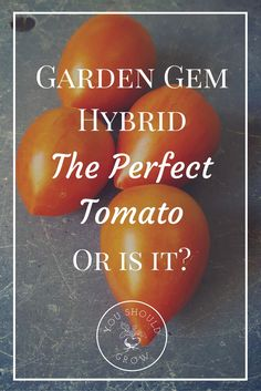 They called it the perfect tomato. Growing tomatoes is our thing, so we had a few thoughts about it. See how it did in our home garden. via @whippoorwillgar
