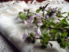 Basilico: un fiore in cucina http://www.foodconfidential.it/basilico-un-fiore-in-cucina/
