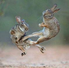 Wildlife Nature, Nature Animals, Animals And Pets, Baby Animals, Funny Animals, Cute Animals, Wildlife Photography, Animal Photography, Rabbit Photos