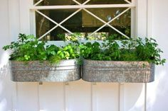 galvanized bucket planters...