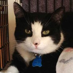 Hello! I am a shelter cat rescued from a center which was overcome with animals after the Hurricane Sandy Superstorm. Although I have been through a lot I'm looking for a loving and supportive forever home. Are you willing to take me into your heart? Come and visit with me soon!