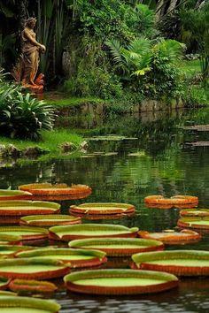 Jardim Botânico,Rio de Janeiro, Brazil.