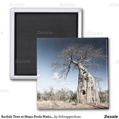 Baobab Tree at Mana Pools National Park, Zimbabwe 1 Inch Round Magnet