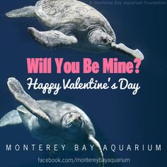 funny valentines 2013
