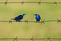 Birds by Mate Bence