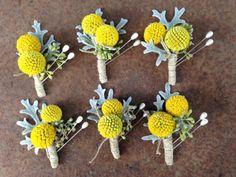 Yellow craspedia boutonnieres. #weddings