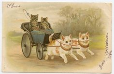1903 Anthropomorphic Cats in a Carriage Artist Helena Maguire Postcard - Vintage Cat Victorian Edwardian Litho Chromo Chat Katze Cool Cats, Photo Chat, Cat Cards, Here Kitty Kitty, Cat Drawing, Vintage Postcards, Cats And Kittens, Cute Animals, Retro