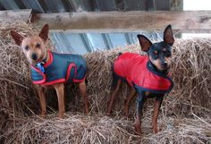 Grey with red trim Red with black trim Dog Coats, Black Trim, Grey, Dogs, Animals, Gray, Coats For Dogs, Animaux, Doggies