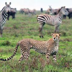 Abercrombi and Kent is an outstanding group for travel to Africa.  Experience of a lifetime!