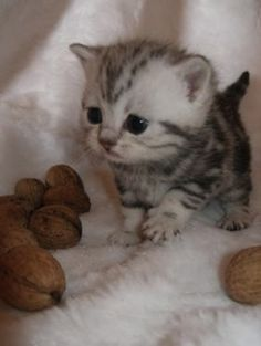 i want this small little creature