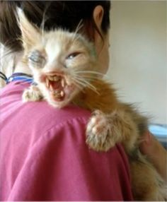 Her Dad Nursed The Abandoned Cat Back To Health | This Abandoned Cat Was Left For Dead Until It Was Rescued