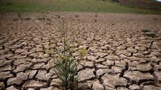"""""""Weeds grow in dry cracked earth that used to be the bottom of Lake McClure on March 24, 2015 in La Grange, California ... California unveils historic water restrictions over drought crisis"""" ...http://news.yahoo.com/california-unveils-historic-water-restrictions-over-drought-crisis-200241456.html;_ylt=A0LEVv7GlxxVHzEAh1wnnIlQ"""