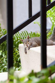 squirrel pics - cuteoverload.com