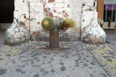 Love this cacti hydrant! #GuerrillaGardening at it's finest.