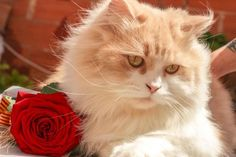 Cute cat photo wish was my kitty Cute Kittens, Coconut Oil For Dogs, Cute Cats Photos, Son Chat, Cat Hacks, Cute Cat Wallpaper, Flower Wallpaper, Cat Behavior, Russian Blue