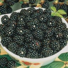 Black Raspberry Extract Aids Cardiovascular Disease