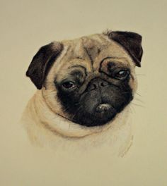 Commissioned Portrait of a Pug dog.