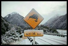 Kiwi winter